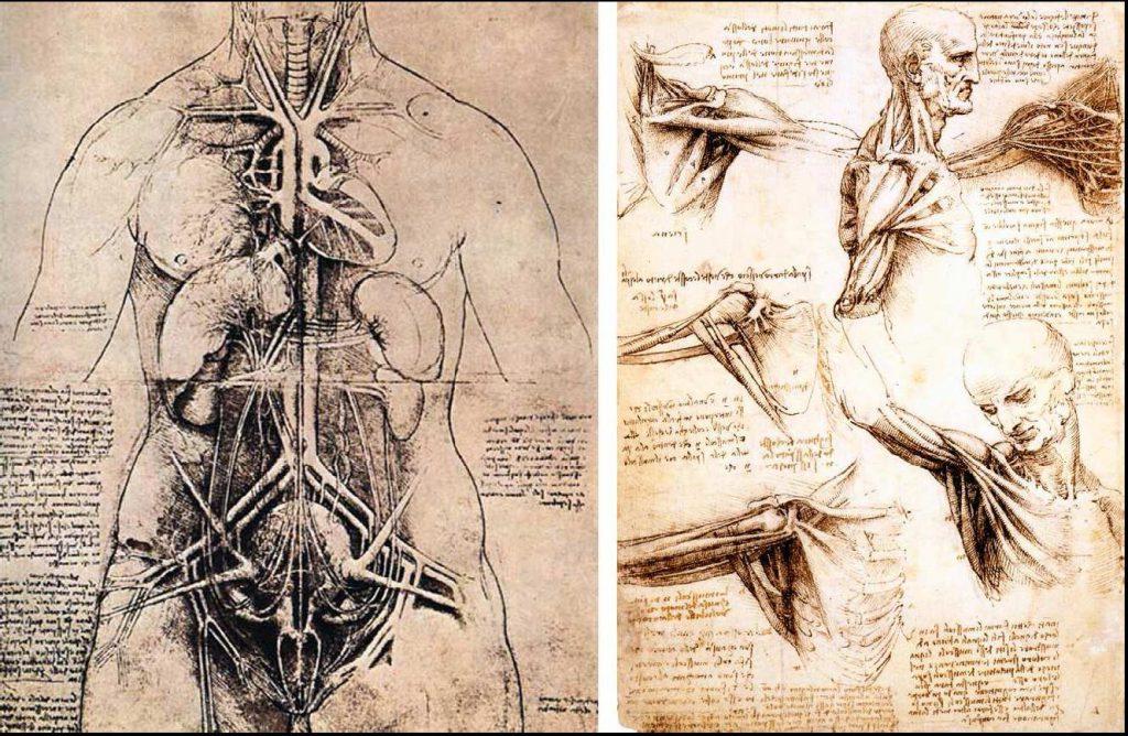 Leonardo-da-Vinci-the-Anatomical-Artist5